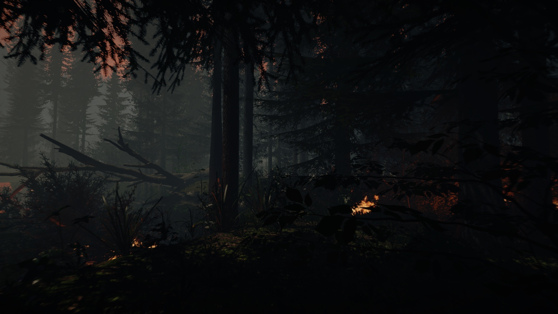 The Forest 3